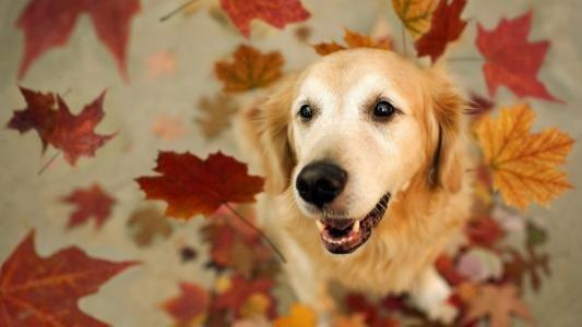 犬冠状病毒病的诊断及治疗方法